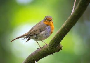 Отново отбелязваме Европейските дни на птиците