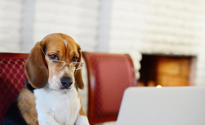 10-те най-твърдоглави породи кучета