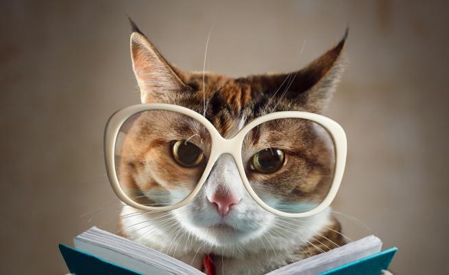 Това са най-умните котки, вижте ги