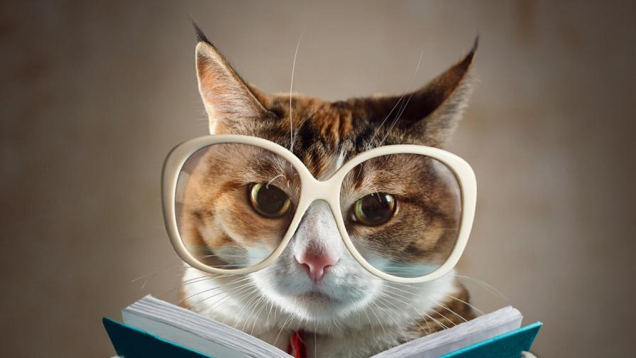 <p>Това са <strong>най-умните котки</strong>, вижте ги</p>
