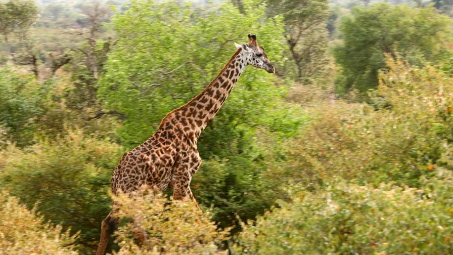 Най-доброто африканско сафари