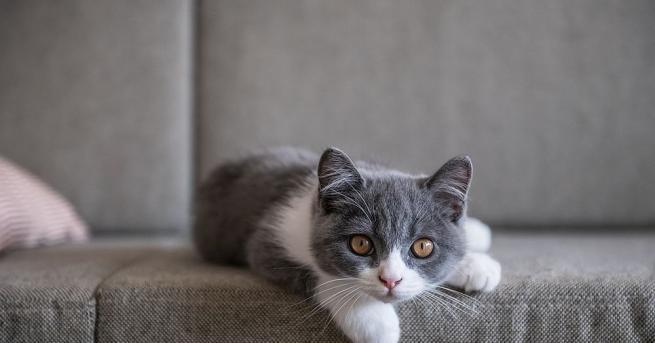 Нека си признаем - котките нямат репутацията на най-преданите и