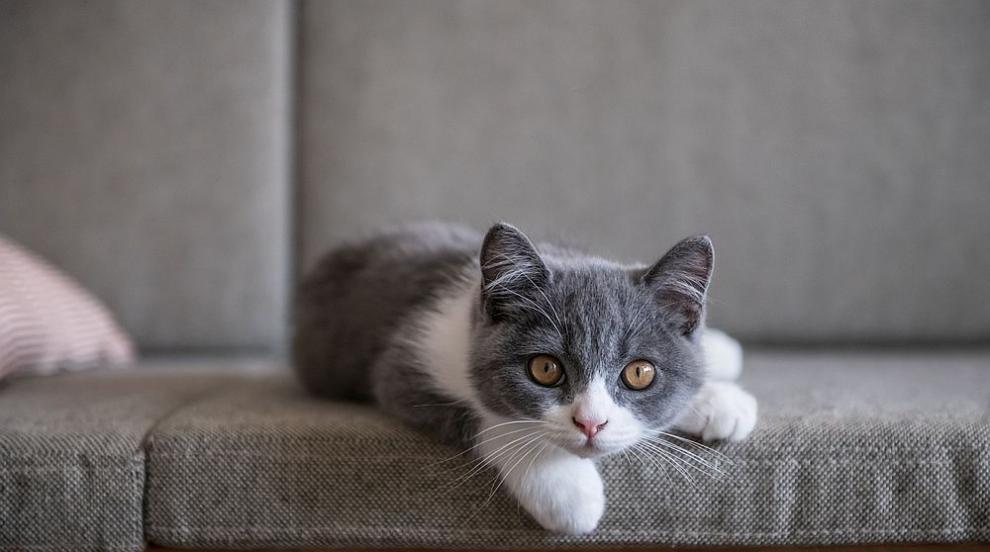 Историите на котки-герои, спасили човешки животи (ВИДЕО)