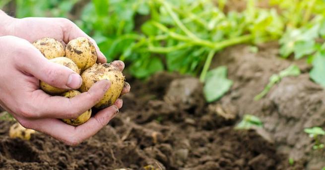 На 22 октомври министърът на земеделието, храните и горите Десислава