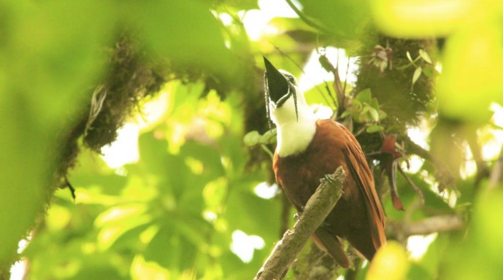 Коя е най-кресливата птица в света? (СНИМКИ/ВИДЕО)