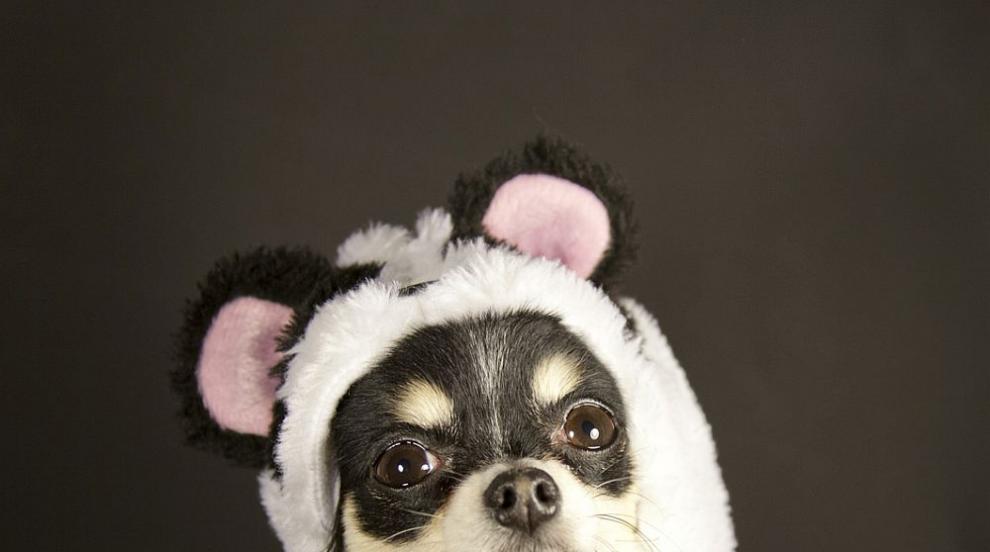 """Кафене в Китай има своите """"кучета панди"""" (СНИМКА)"""