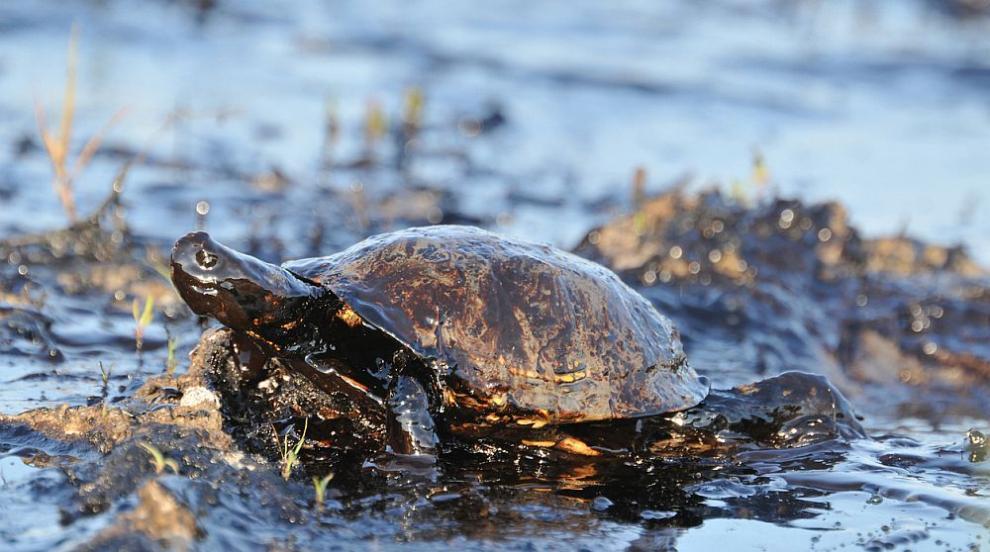 Бразилия подозира още четири танкера за големия петролен разлив