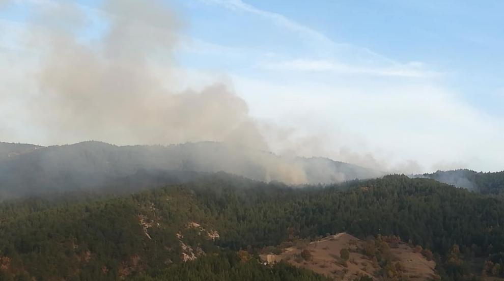 Пожарът над Чипровци е обхванал над 40 000 декара (ВИДЕО)