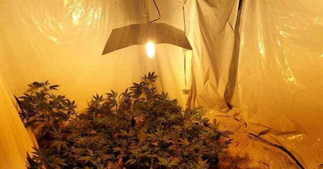 Задържаха баща и син, отглеждали марихуана в оранжерия, съобщиха от