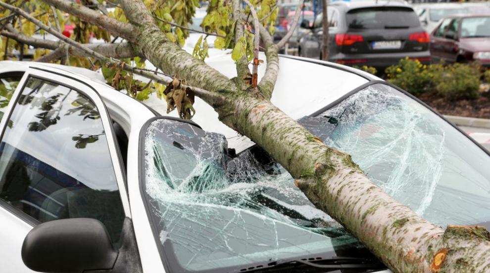 Осъдиха община да плати за смачкана от дърво кола