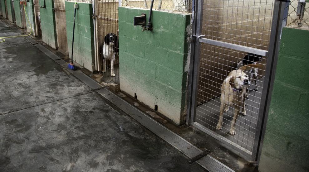 717 кучета от общинските приюти в София са осиновени от началото на годината