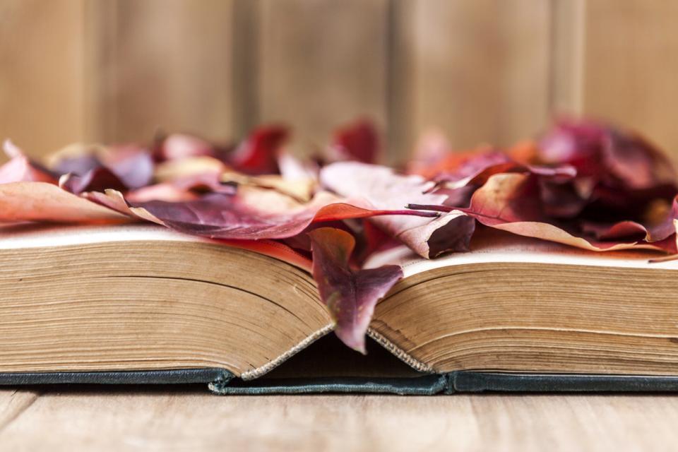 есен книга уют
