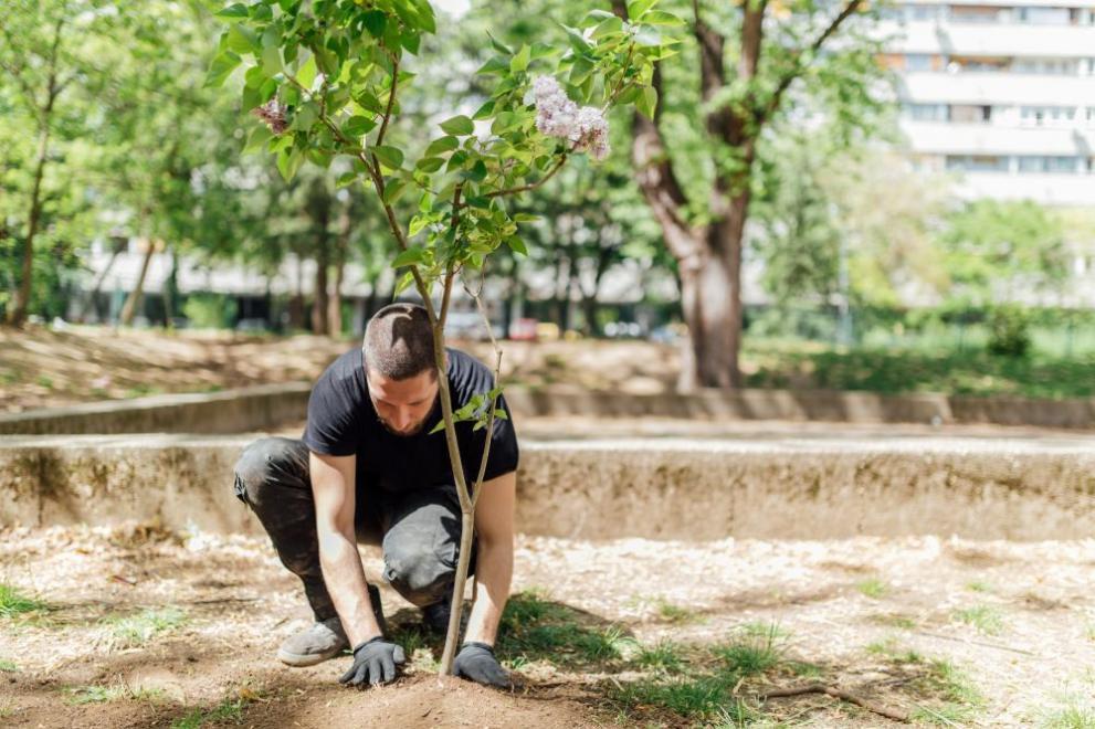 Резултат с изображение за новата гора на софия