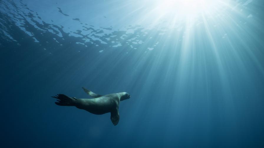 Смъртоносен вирус се разпространява в Тихия океан