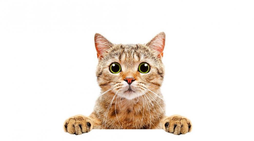 Знаете ли това за котките?
