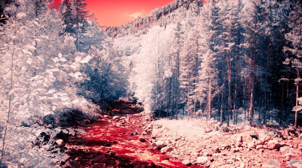 Кървава река потече в Южна Корея заради клане на прасета