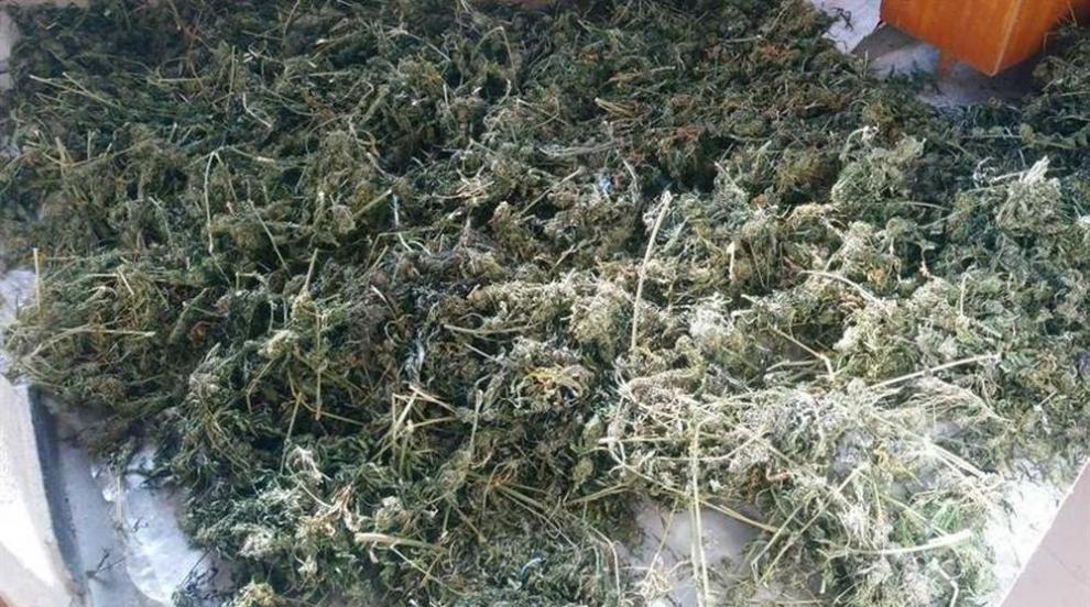 След спецакция: Иззеха голямо количество наркотици в Русенско (СНИМКИ)