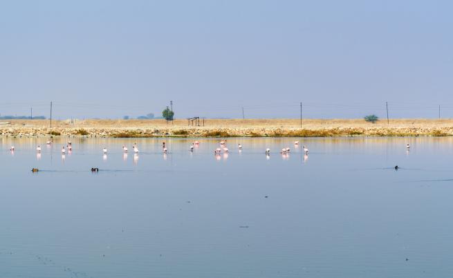 Мистерия: хиляди мъртви птици край езеро