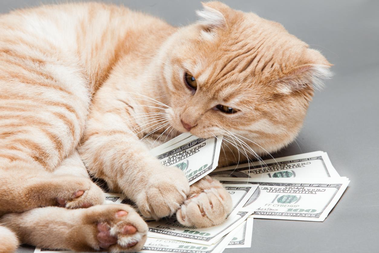 <p><strong>Най-богатата котка</strong></p>  <p>През май 1988 г., когато милионерът Бен Реа умира, близките му установяват, че в завещанието си той оставя цели 12 млн. долара на своята котка Блеки. И до днес Блеки е най-богатата котка в историята на рекордите на Гинес.</p>