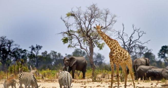 Хиляди животни ще бъдат преместени от най-големия национален парк в
