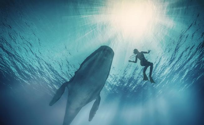 Видео с кит, преминаващ край група сърфисти, стана хит в интернет