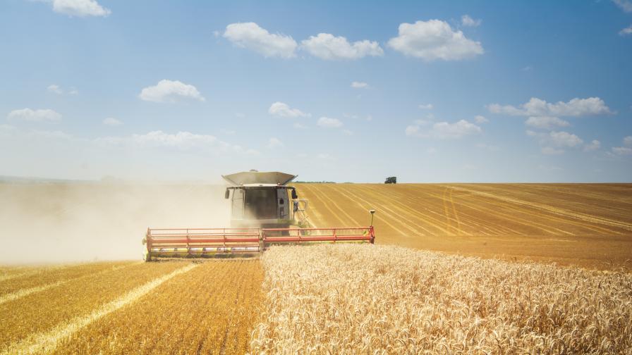 Прибиране на пшеницата