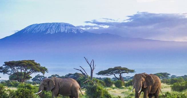 Около една трета от тропическите африкански растения са заплашени от