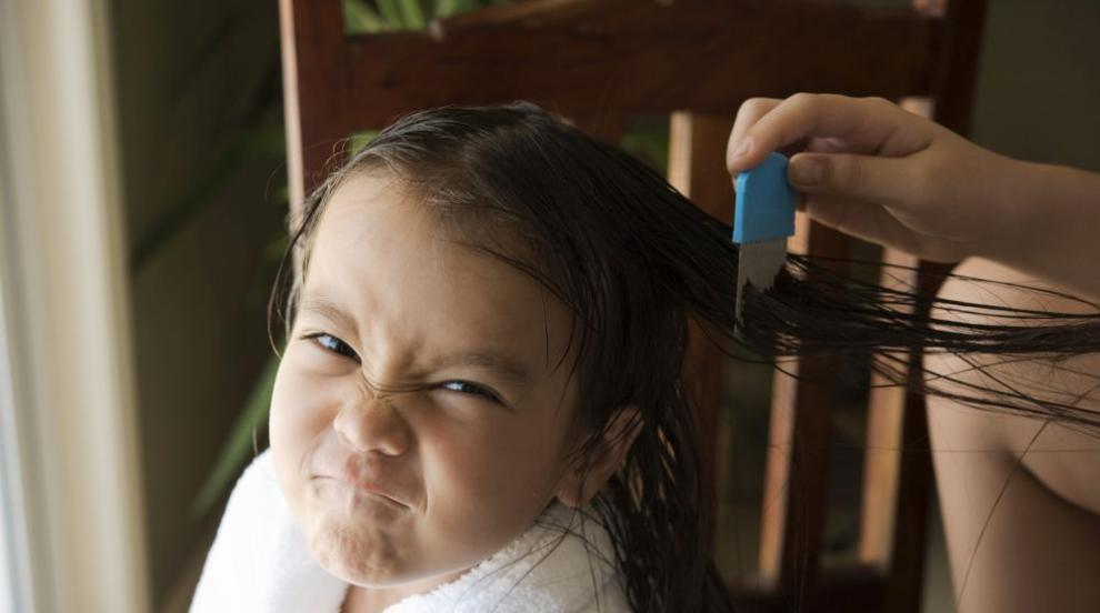 Внимание, родители! Въшките атакуват през зимата (СНИМКИ)