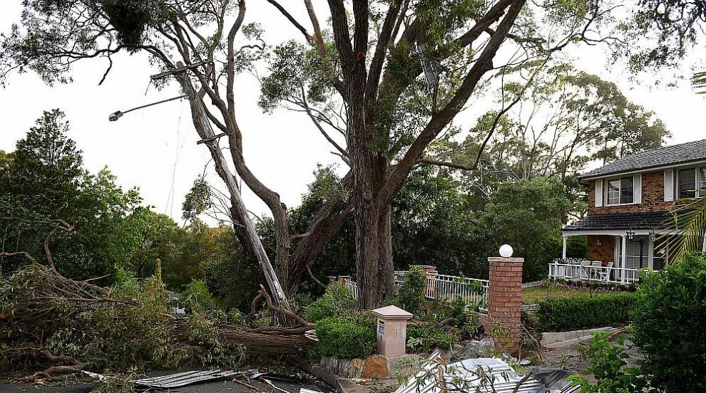 Буря в Сидни остави десетки хиляди без ток, повали дървета и блокира пътища...