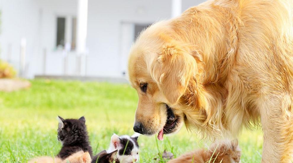 Истински герой: Бездомно куче спаси котенца от измръзване (СНИМКИ)