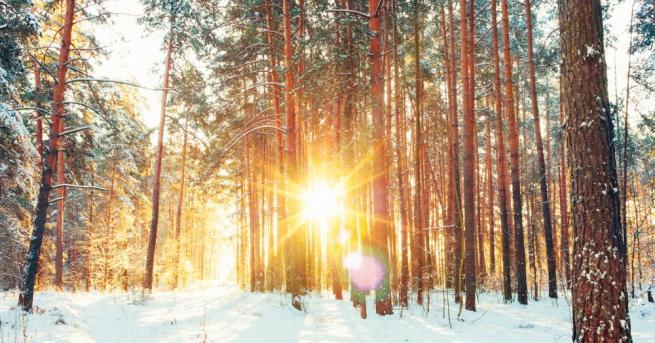 """Падналият сняг на""""Бузлуджа"""" сътвори истинска зимна приказка. В социалните мрежи"""