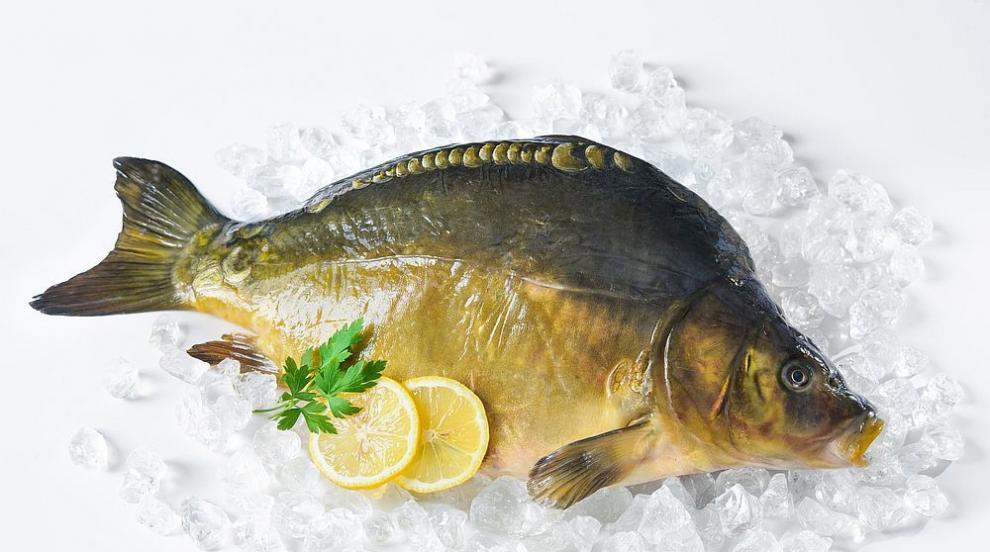 По какво да разпознаем прясната риба
