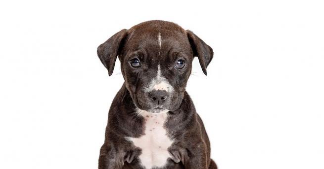 Куче, живеещо във Великобритания, може да е поставило световен рекорд,