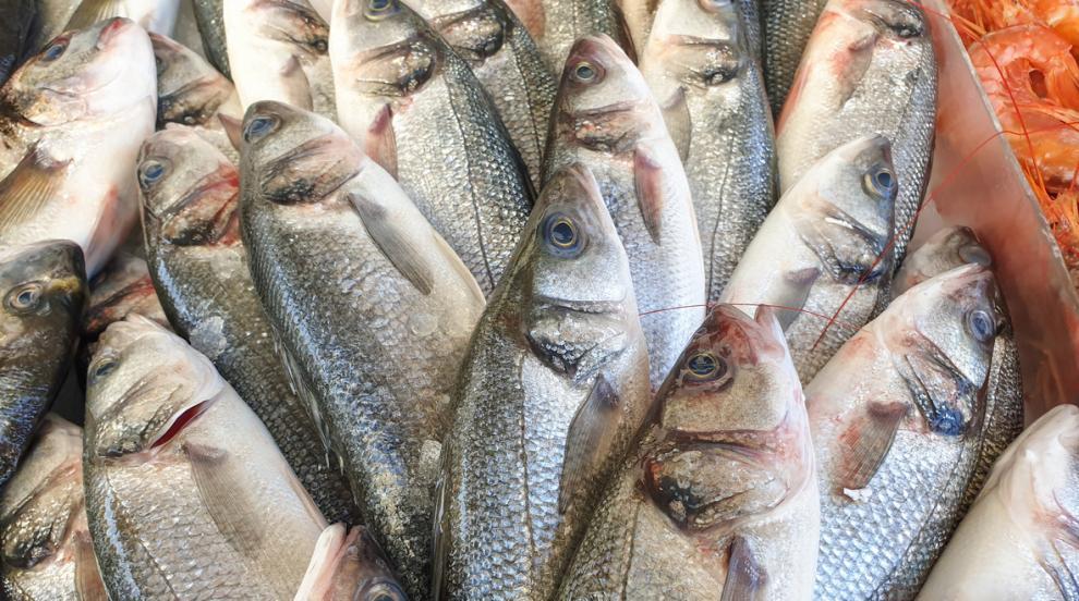 Стотици килограми умряла риба изплува по бреговете...