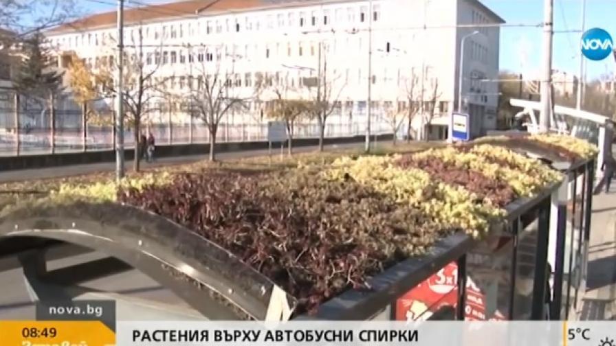"""""""Зелени шапки"""" в Бургас, малко хора ги видяха"""