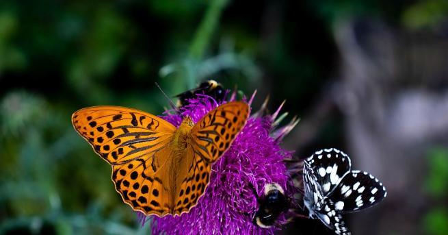 Цветята са едни от най-прекрасните дарове на природата. Те носят
