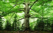 Спят ли дърветата? Учени с интересно изследване