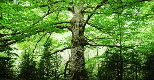 Любопитно Спят ли дърветата? Учени с интересно изследване Дълго време