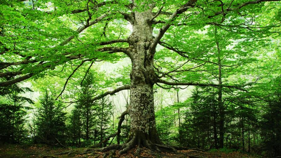 <p>Спят ли дърветата? Учени с интересно изследване</p>