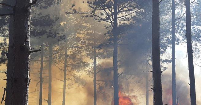 Снимка: Пожар горя в защитената местност Орловото блато