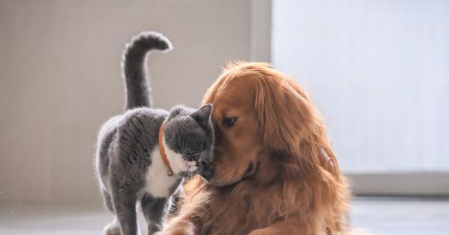 Ако сте се питали какви ги вършат кучетата и котките,