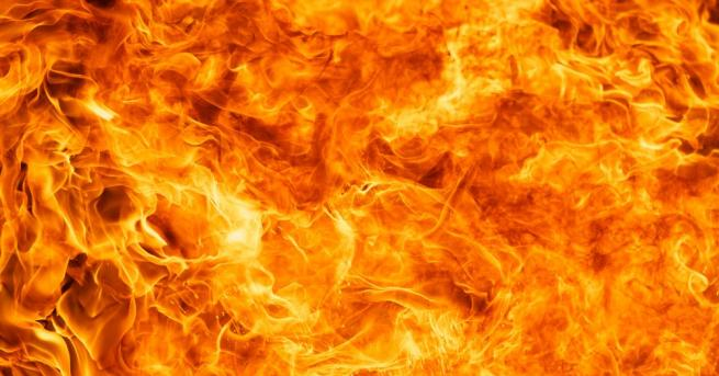 11 елитни коня са загинали при пожар край врачанското село