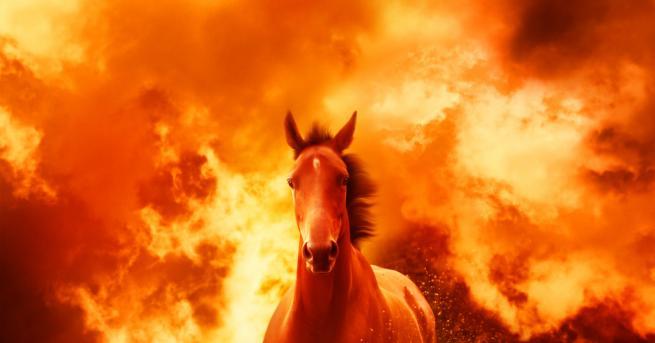България Елитни коне за десетки хиляди изгоряха във Врачанско Животните