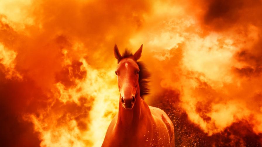 Елитни коне за десетки хиляди левове изгоряха във Врачанско