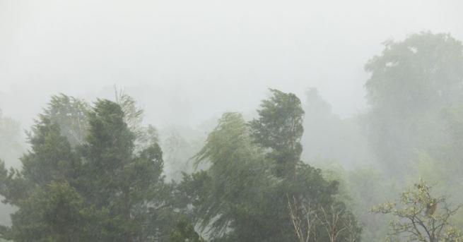 Във връзка със силния вятър и валежи днес в София