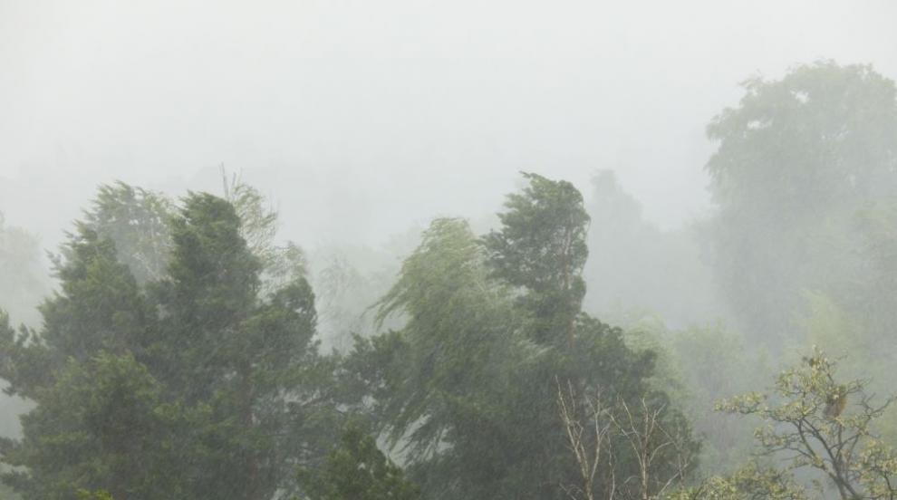 Силният вятър в София събори клони на дървета