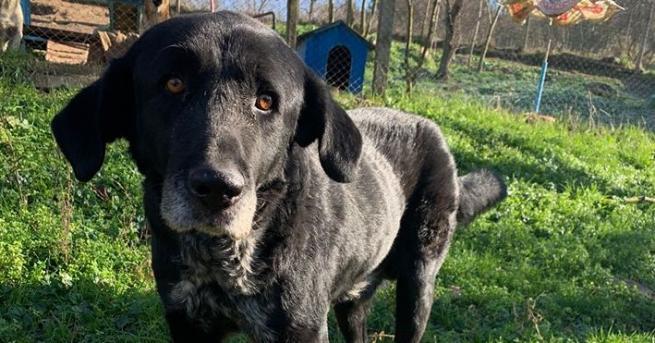 Изумителната история на кучето Бари от Бургас е като сюжет