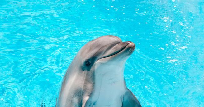 Любопитно Защо делфините плуват по различен начин от акулите? Защо