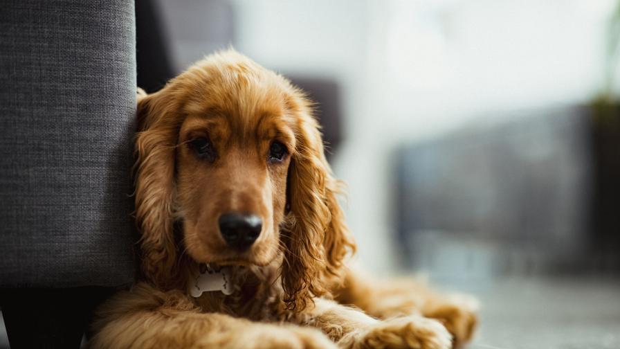 10 породи кучета, подходящи за отглеждане в...