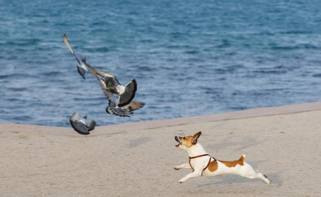 Куче, което не може да ходи и гълъб, който не може да лети – най-добри приятели
